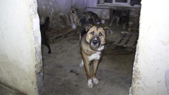 Игорь Гурьев посетил приют для собак