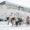 В Воркуте прошли гонки на оленьих упряжках (ВИДЕО)
