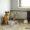 В Воркуте из приюта для животных пропали 160 собак